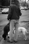 """Pooches"" - Neighborhood: Fox Chase / Burholme"